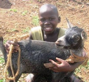 Jean Marie w goat tube c