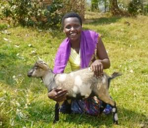 ! Abishyizehamwe goat wide lo c