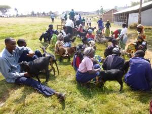 ! Abishyizehamwe goat recipients