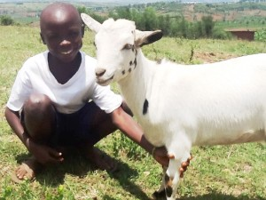 """""""It is not just a goat but also joy, hope and confidence in a poor family."""" Bosco Muragwa"""