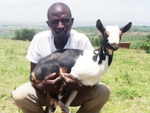 goat man white
