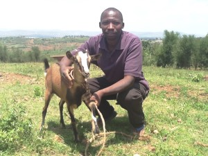 k goat purple
