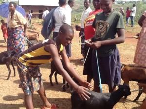 2 goat boys