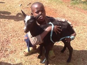 goat boy 2