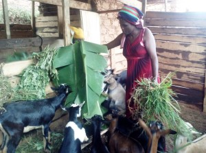 """Our lives have been given a meaning. We used to be jobless but we have what to do since we received these goats. Our dreams in development are becoming a reality as time goes. These goats are going to make us people of a great value in this community. Thanks to our donor Pat."" Jeanne D'Arc Mukamana"