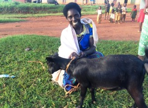 Genda goat blue