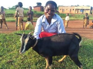 Genda goat blue shirt