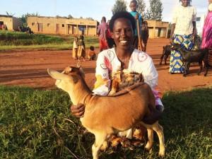 Genda goat brown