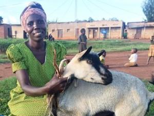 Genda goat close green