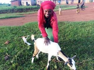 Genda goat ! red