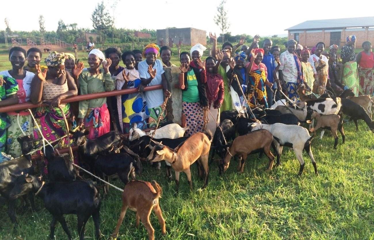 ! Genda goats 4 c