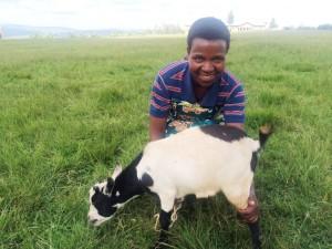 Twire goat 11