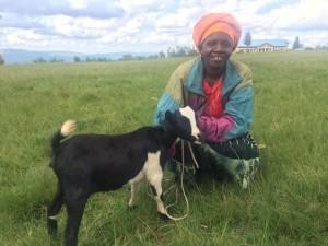 Twire goat 3