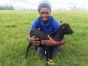 Twire goat 5