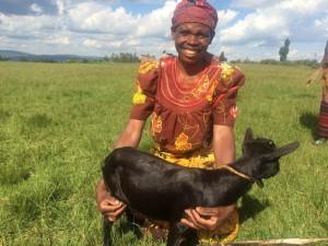Twire goat 8