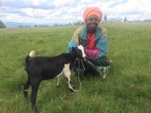 Twire goat
