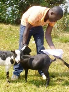Abishyizehamwe goats Dany
