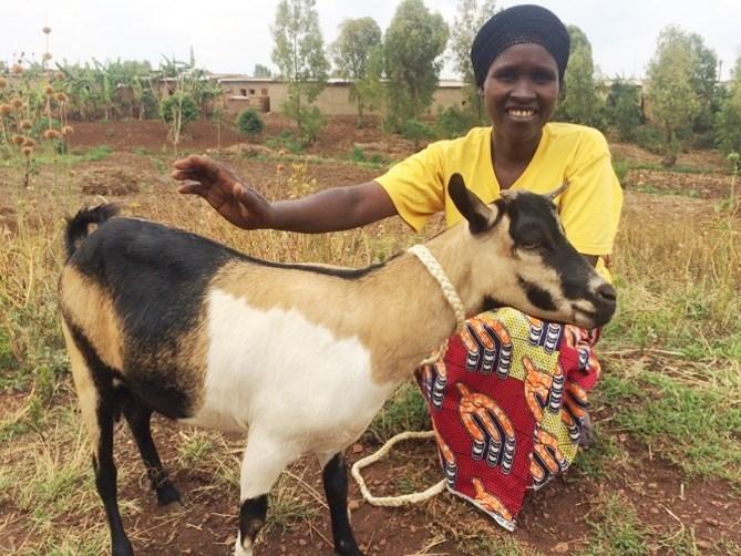 goat Gentile