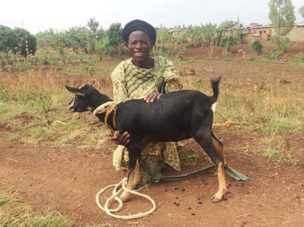 goat Marie