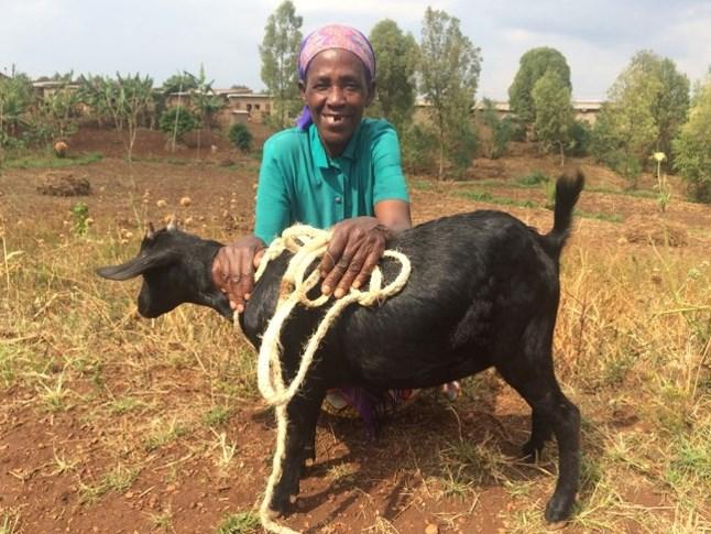 goat Theresie