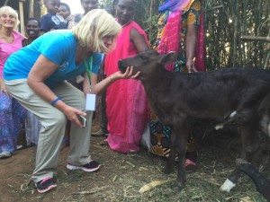 ! 1c Murindi calf Annetta gf