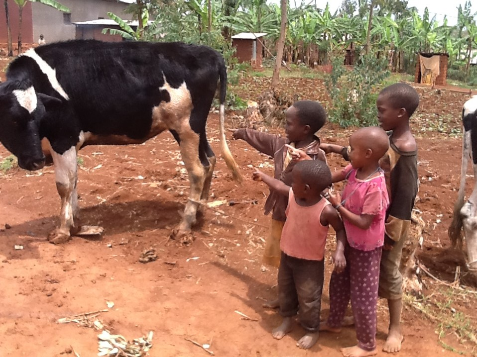 1-imbere-cow-all-and-kids
