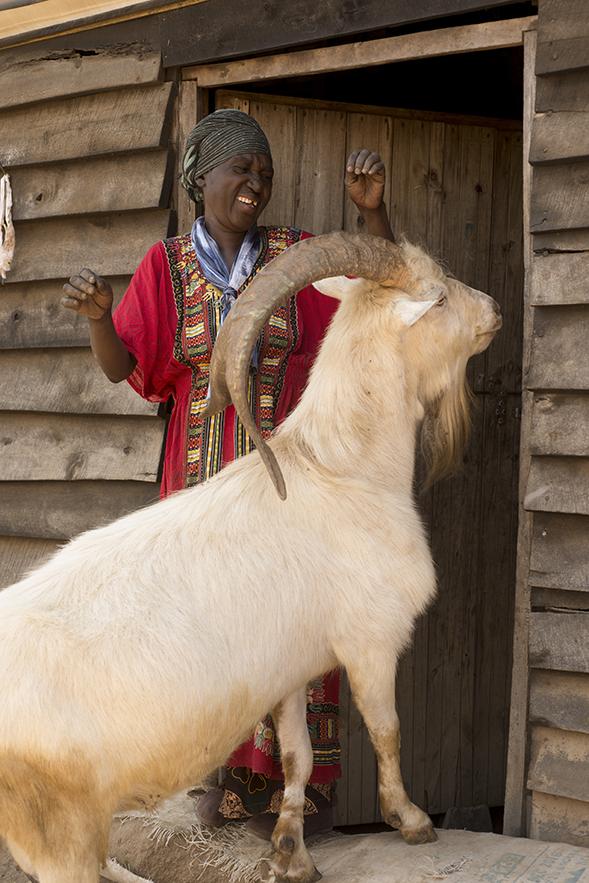 1a Cokawi milk Mariam goat Fran Collin (4)