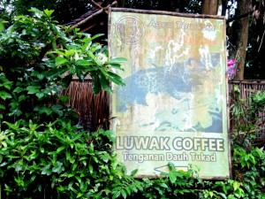 Luwak Coffee (2)