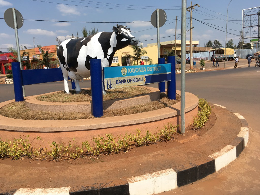 5 Kayonza 1 cow dm