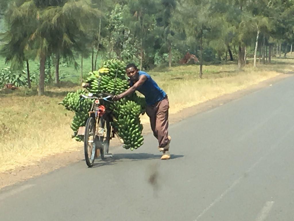 land carry banana dm