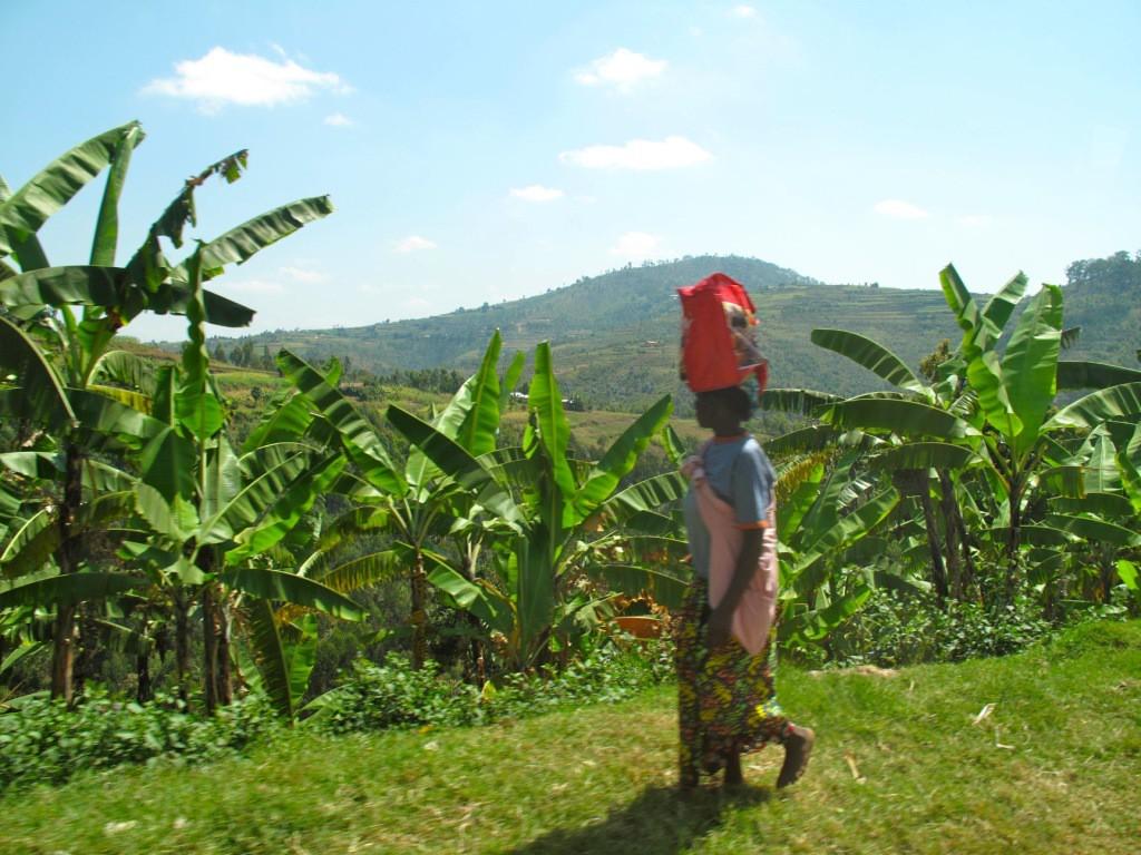 landscape bananas - Jojo
