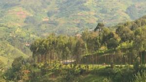 rwanda jungle mountain landscape