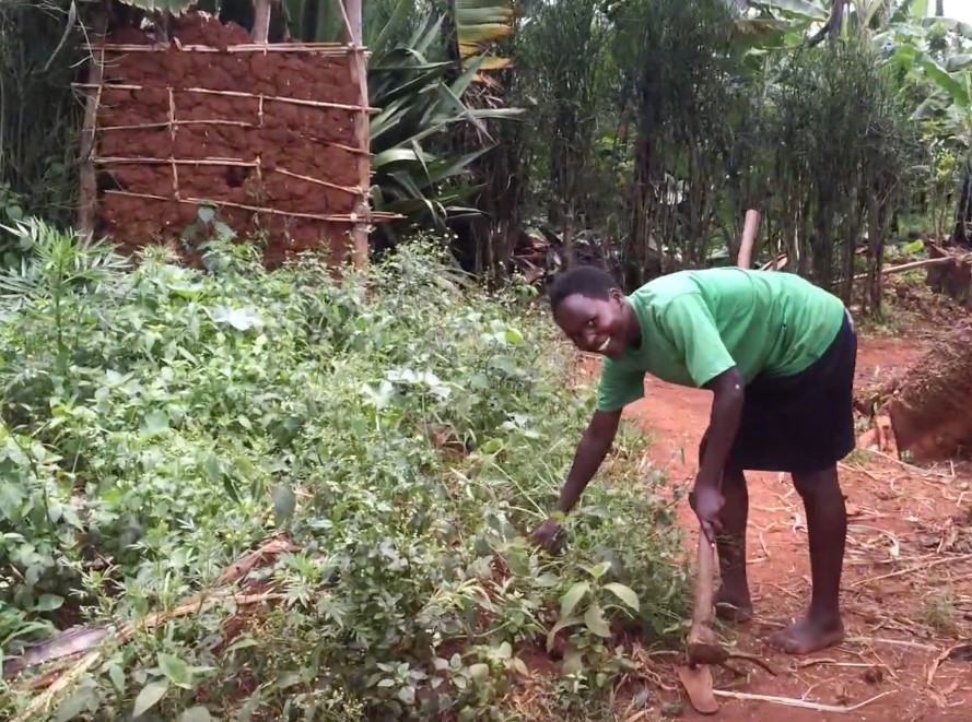 Celine farming