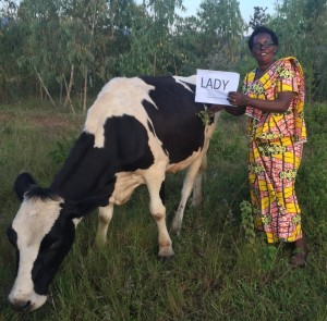 1 Cows Marie Murindi