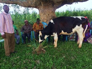 """Anastase: """"We are so much happy to receive these cows. Life is no longer the same. Thank you dear donors for your contributions towards our better future."""""""