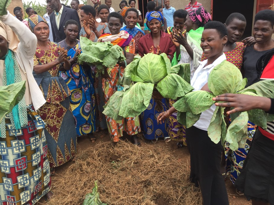 The co-op members share with delight the beautiful cabbages grown with fertilizer from their goats and cows