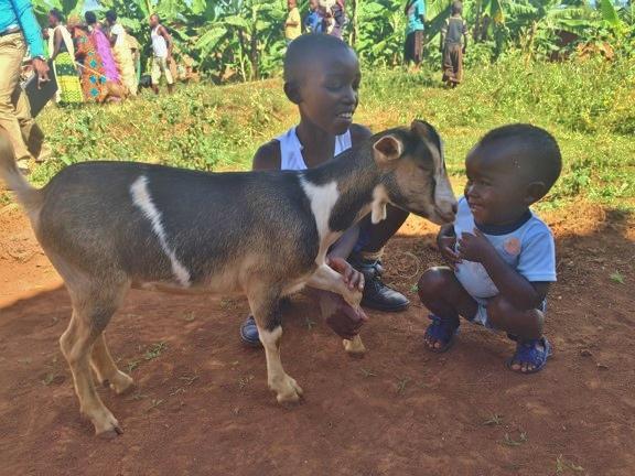 Itorero goats kids