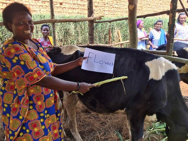 Twiyu naming cow name Flower (2)