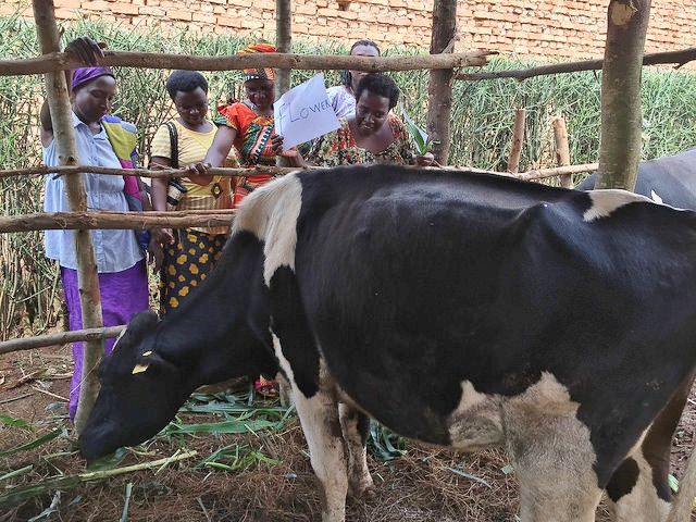 """Anastasie: """"We like this name so much. We feel that a flower is something which always makes you happy any time you look at it. The fact that our cow is given this name, we will love it the same way each one of us loves this name flower. We cannot thank our donors, All Saints by The Sea, enough."""""""